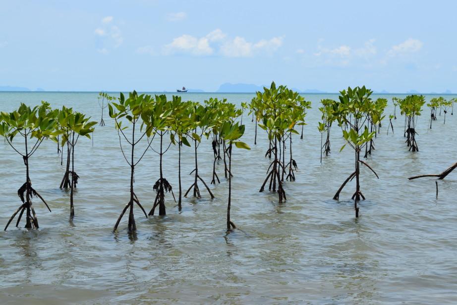 остров пханган интересные места