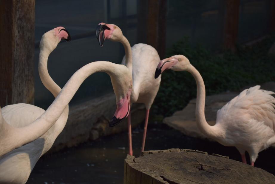 расписание зоопарка в чианг мае