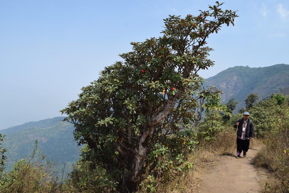 Дой Интханон (Doi Inthanon) в Чианг Мае