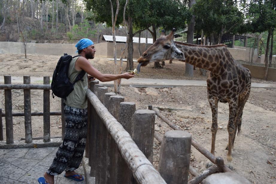 зоопарк цены на билеты