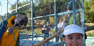сафари парк геленджик отзывы