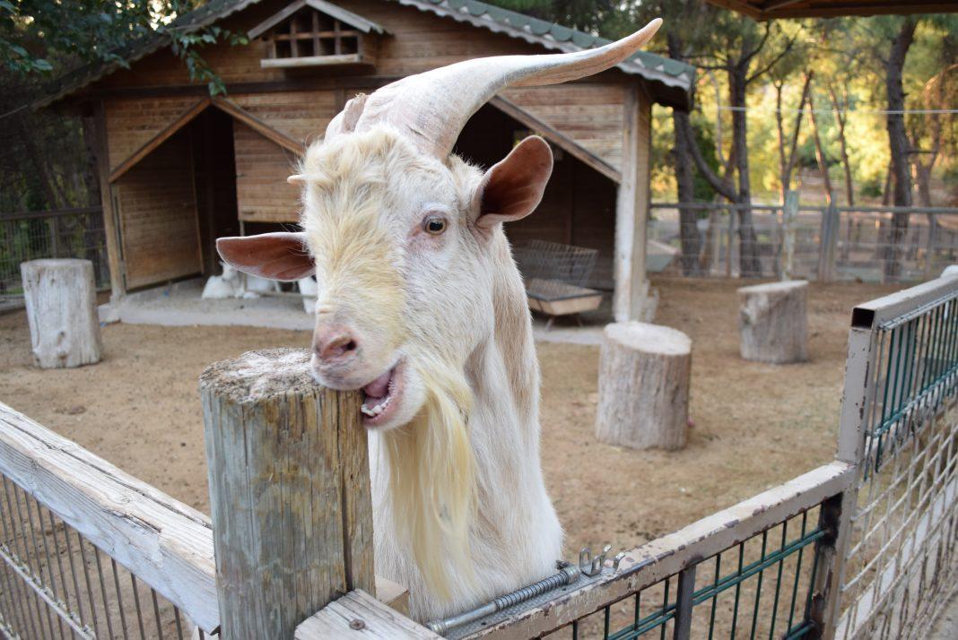 зоопарк Анталия цены
