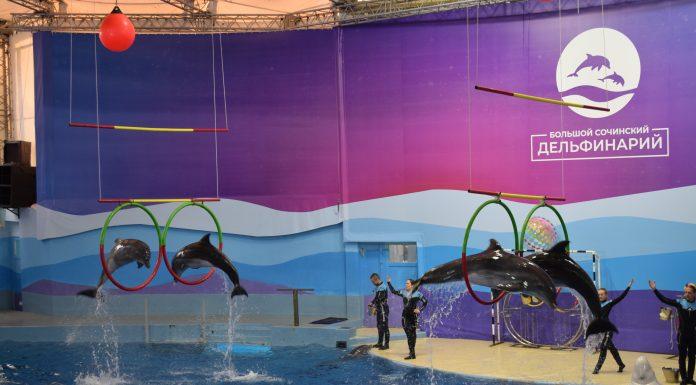 дельфинарий сочи ривьера расписание цена